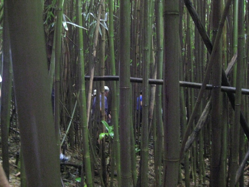 Oahu-bamboo-forest-hike