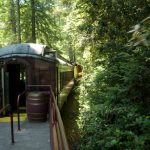 fort-bragg-skunk-train-forest