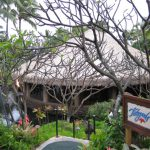 kauai-tidepools