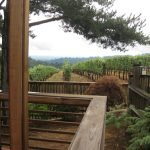oregon-wine-torii-mor-deck