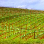 pdx-lane-county-vineyard