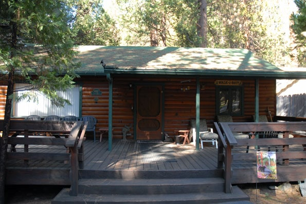 Redwoods in Yosemite Cabin.
