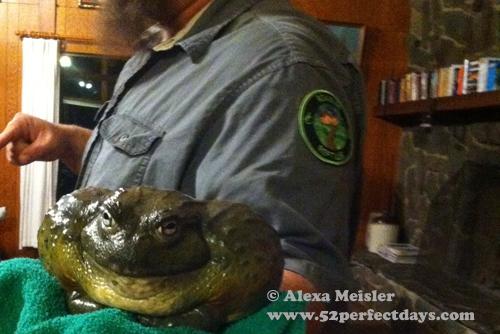 rankin-guest-ranch-frog