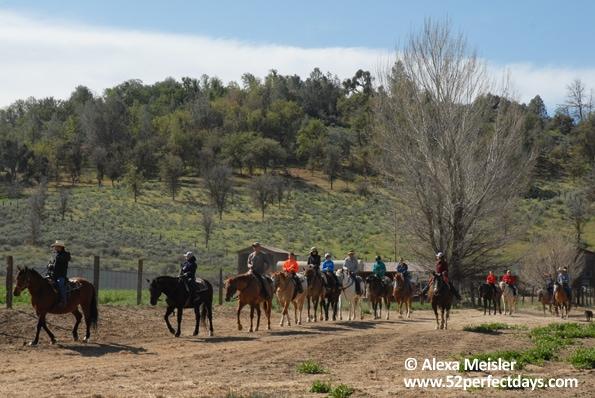 rankin-guest-ranch-horse-back-ride-field