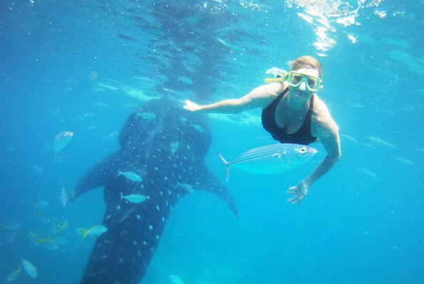 oslob. cebu, philippines, whale sharks