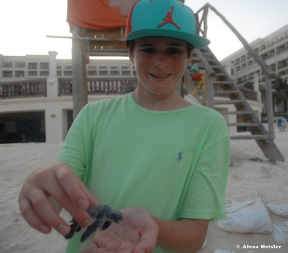 Baby turtle release at CasaMagna Cancun, Mexico